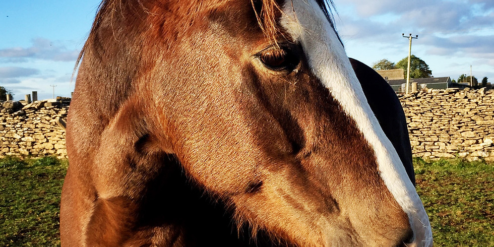 Horse Dance: The Gift in the Wound