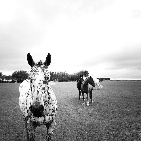 herd_edited.jpg