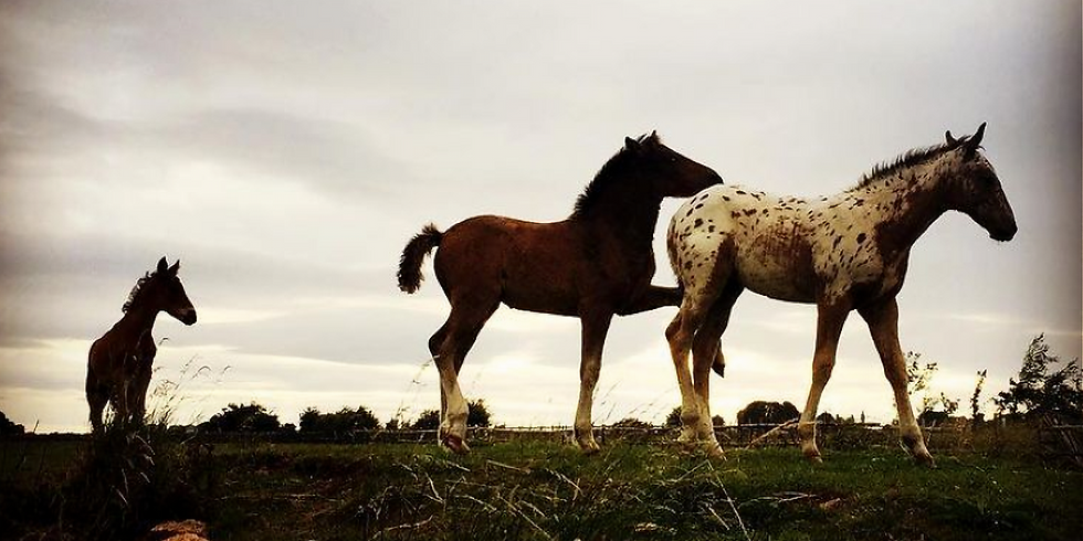 Equine-Assisted Soul Experience