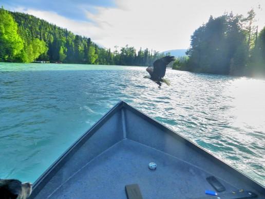 boat-eagle-uai-516x387
