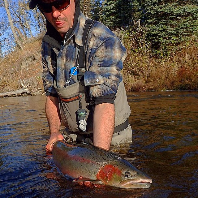 At least the fish knows how to hold a pose! _#steelhead#flyfishing#opst#barblessorbust#alaska#alaska