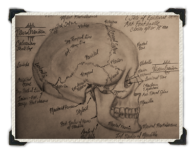 Skull Postcard by Ordovich
