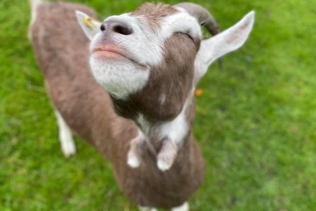 Goat Fab.jpg