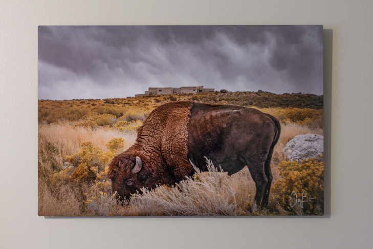 Metal Print Collection (The Bison)