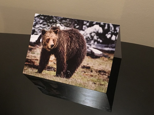Grizzly Card