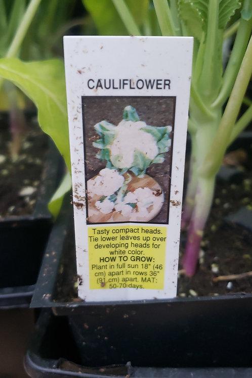 Cauliflower 4-pack