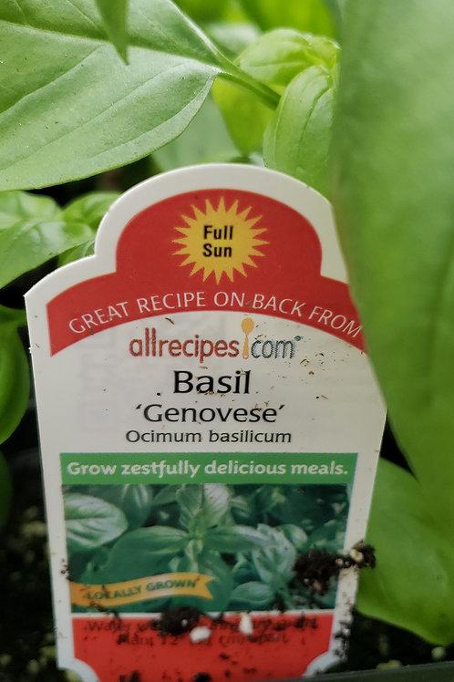 "Basil 'Genovese' 4"" Pot"