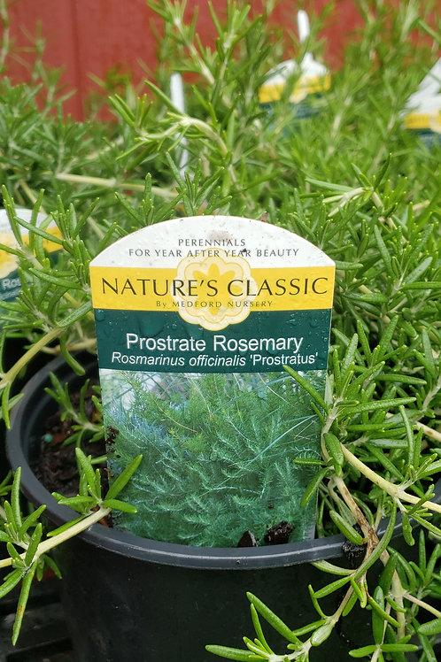 Rosemary 1 Gallon
