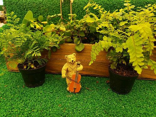 Bear Playing Cello