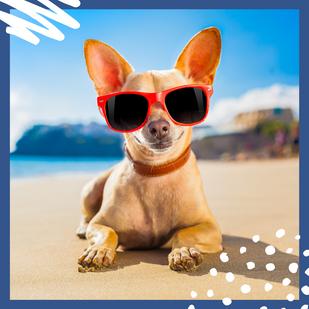 ¿Sabes que vas a hacer en estas próximas vacaciones?