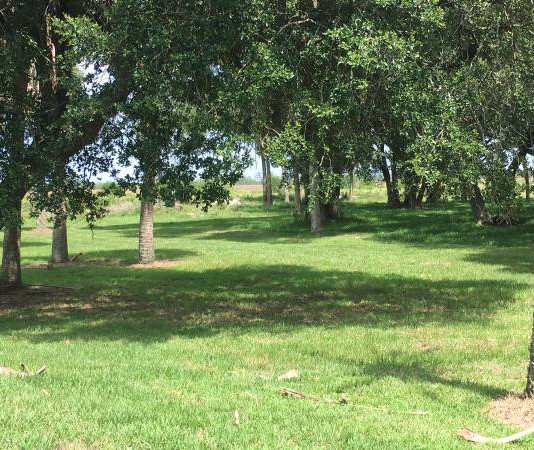 Thompsons farm oak hammock.jpg