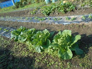 10月:秋の野菜