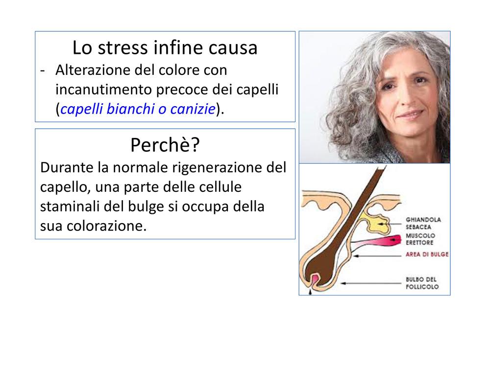 STRESS-CADUTA-STEMCELL-26ottobre2020-18.