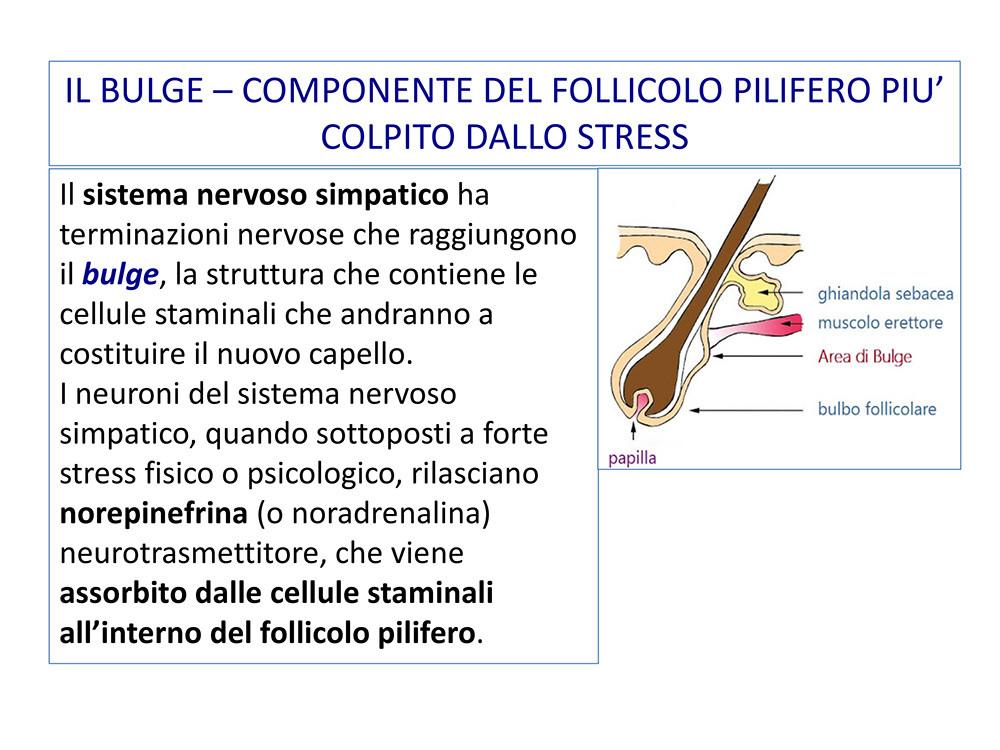 STRESS-CADUTA-STEMCELL-26ottobre2020-19.