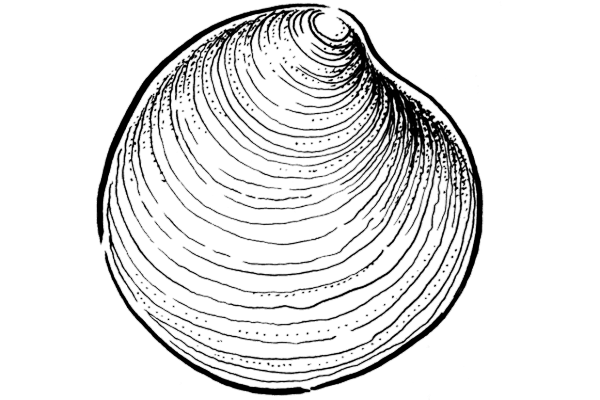 moon_shell.png