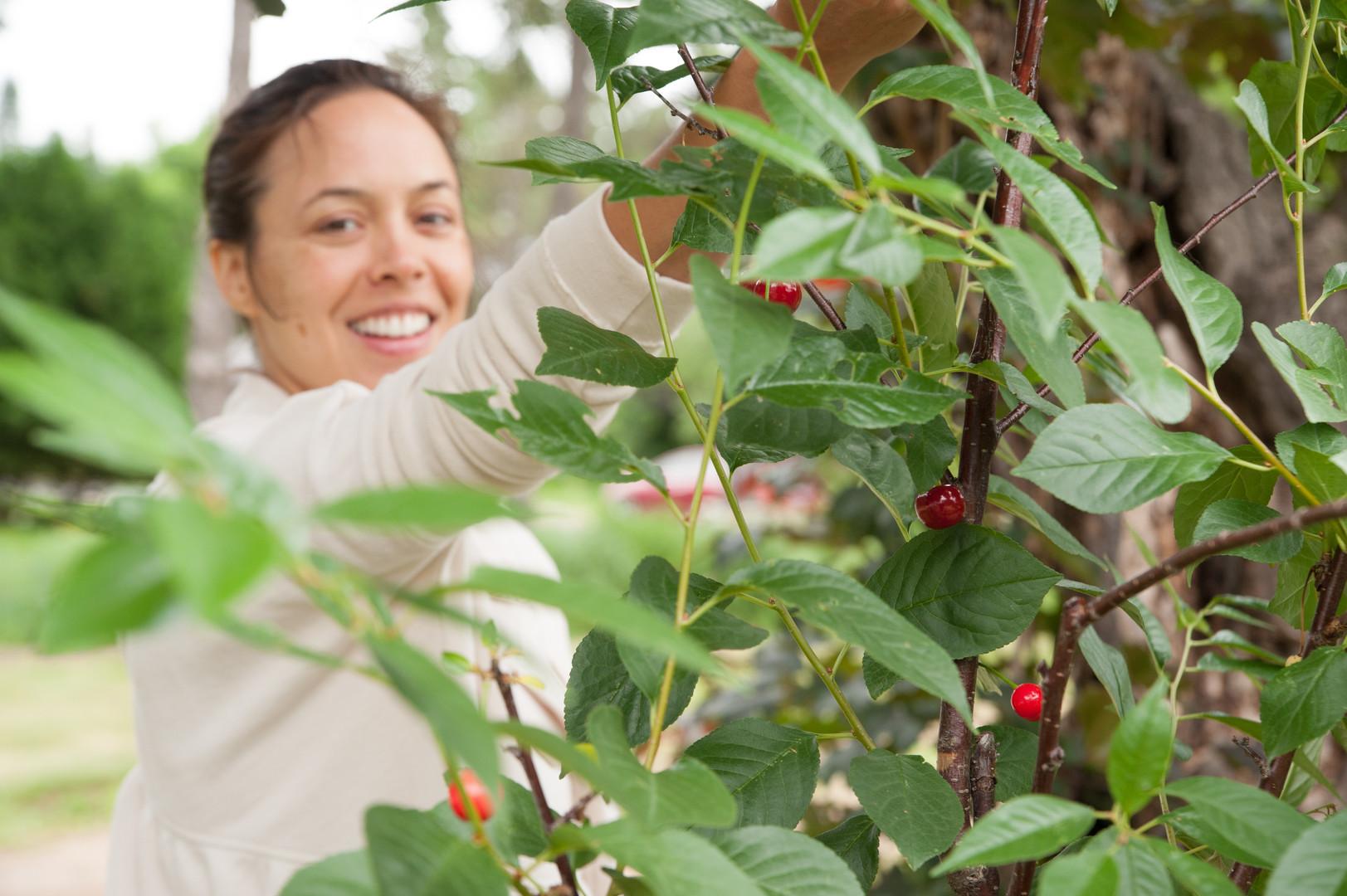 Backyard Orchards