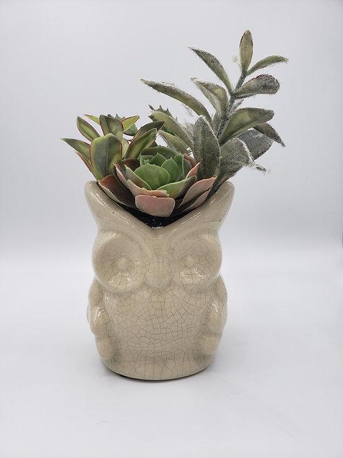 Owl Plant
