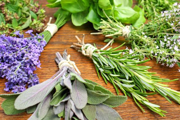 Hierbas medicinales.jpg