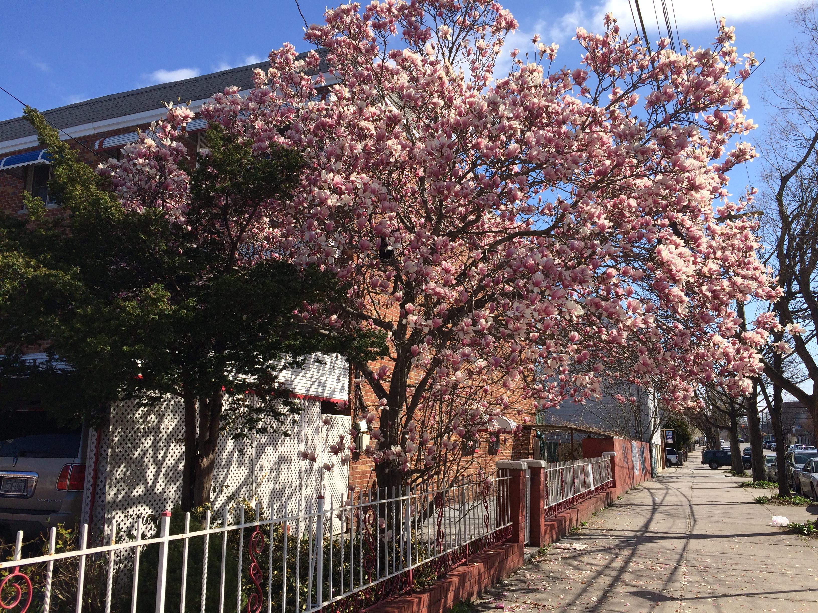 Spring2_Rivera