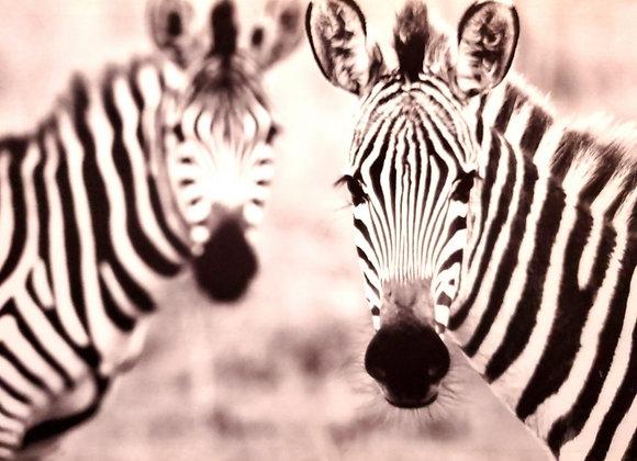 Gazing Zebra Back-lit Painting