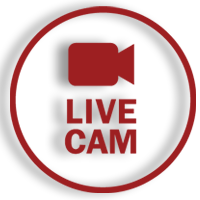live-cam.png