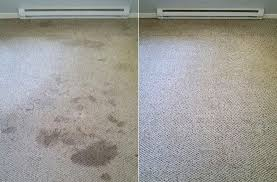 Before and After Carpet Care