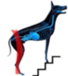 blue dog copy4.jpg