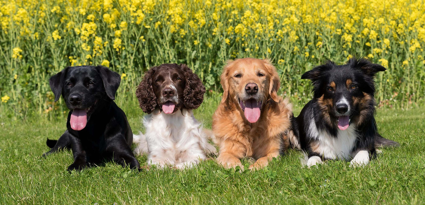 4 dogs3.jpg