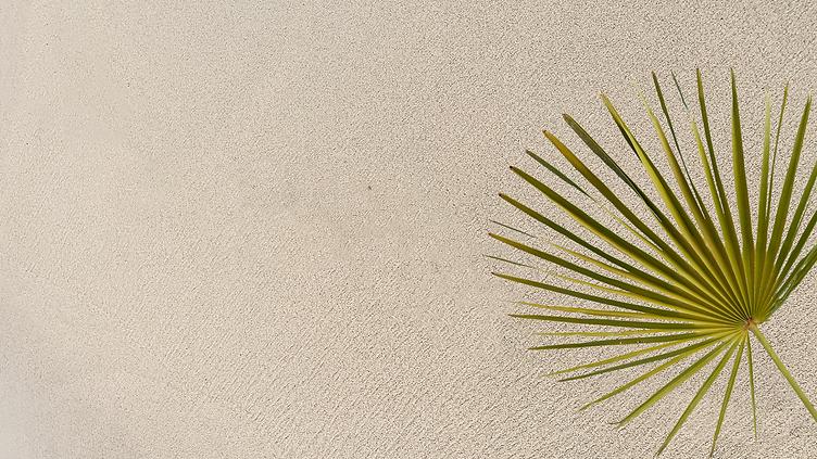 Fondo Playa y Palmeras.PNG