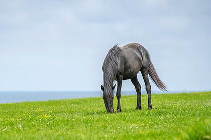 beautiful-shot-of-wild-horse.png