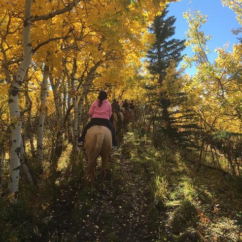 Horseback Adventure