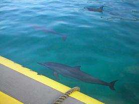 Hawaii dolphin snorkel tour