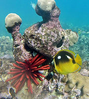 Hawaii snorkel tours