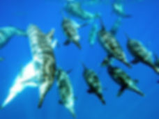 dolphin snorkel adventure