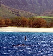 Hawaii Swim with Dolphins Snorkel tour