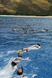 swim with dolphins tour