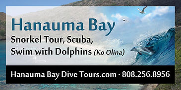 Hawaii Snorkel Dolphin Tour