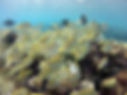 Hanauma Bay Four Spot Butterfly Fish