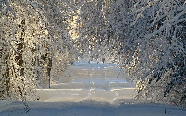 winter-1060526.jpg