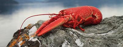 lobster-1134641_1920 (2).jpg