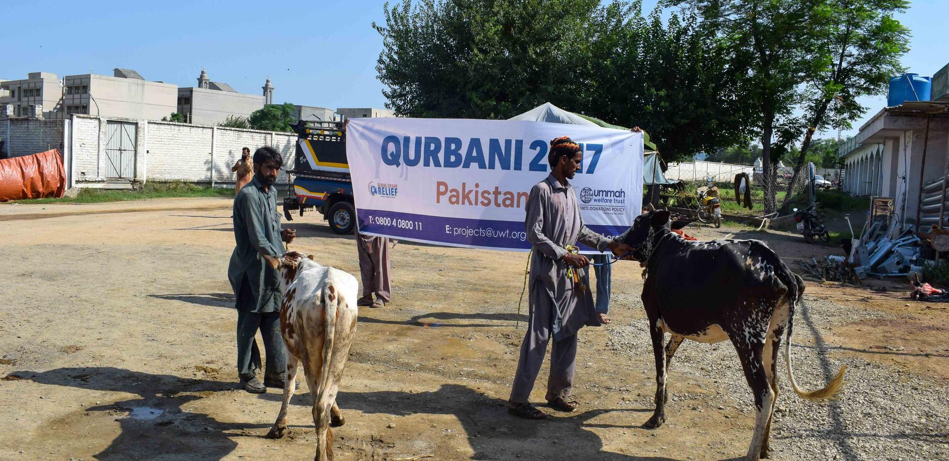 Qurban in Pakistan 2017