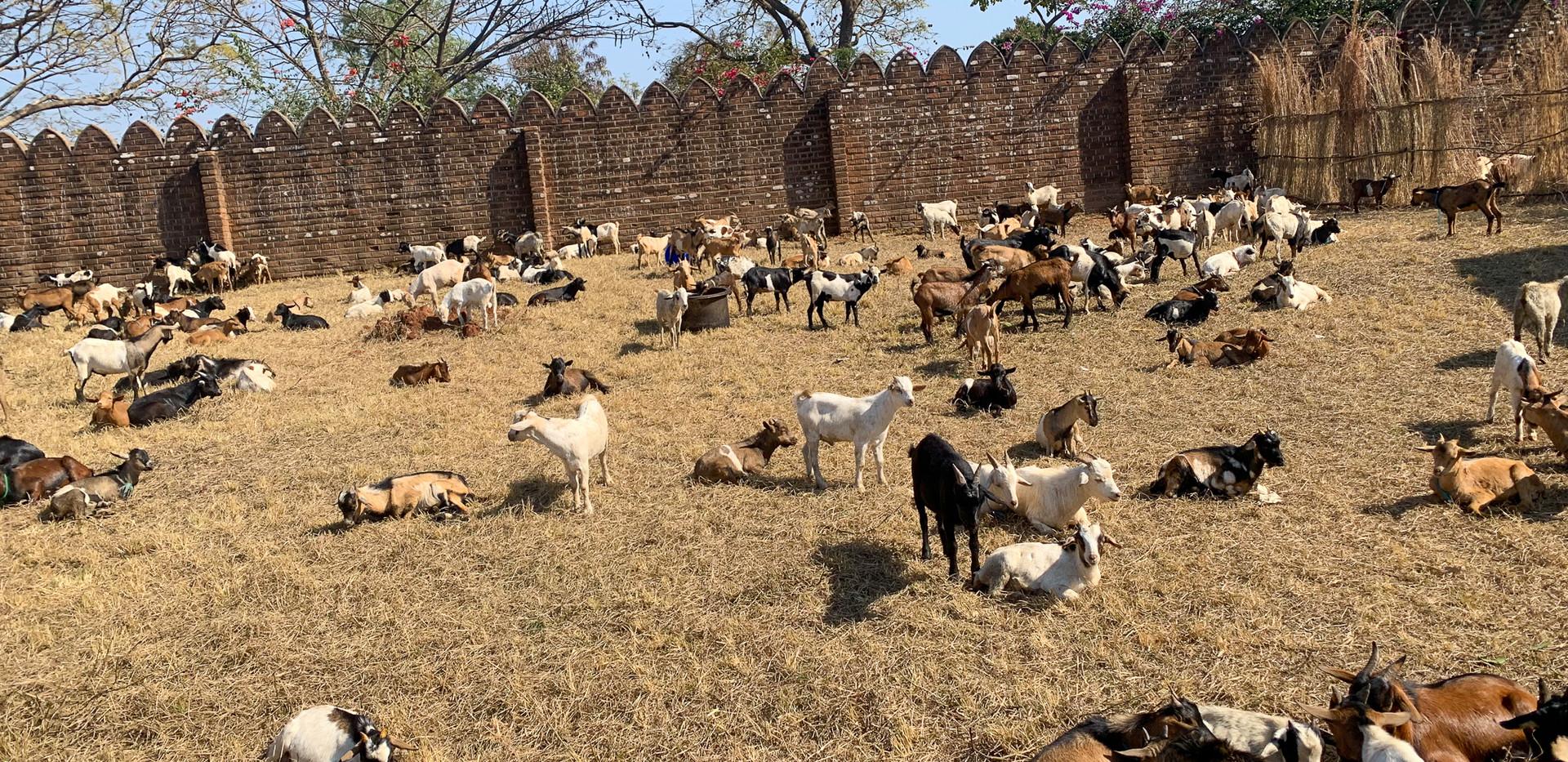 Malawi__Qurban 2019