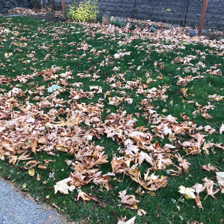 Mother Nature's Free Mulch