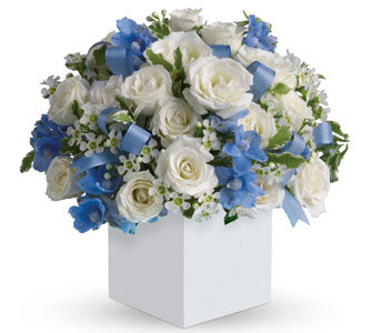 white&blue in box