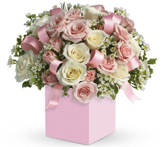 white&pink in box