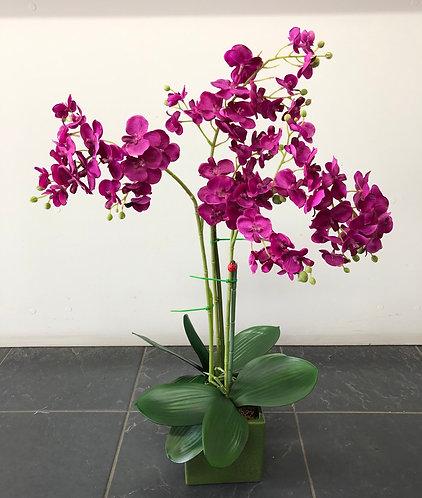 Hot pink orchid plant arrangement