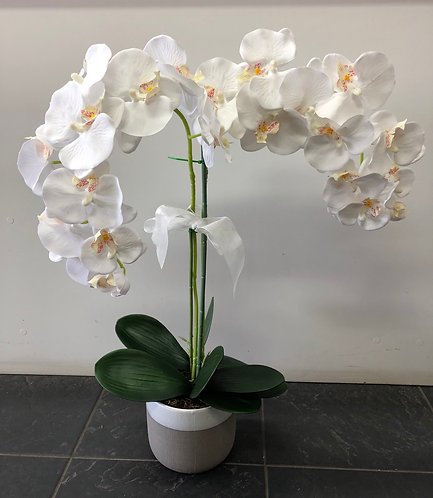 White orchid plant arrangement