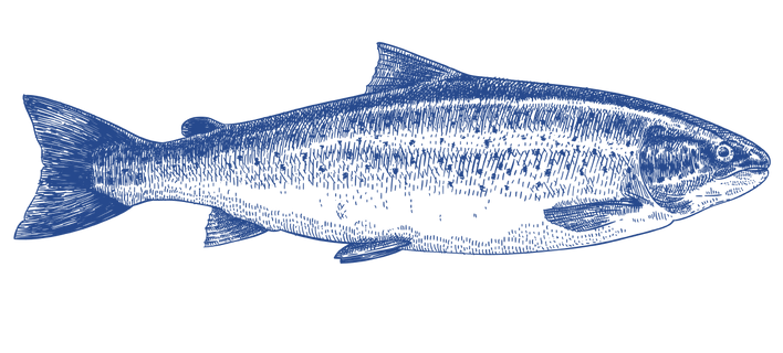 salmon-blue3.png