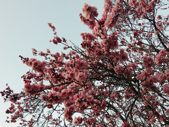 Spring will come | by Belle Formica