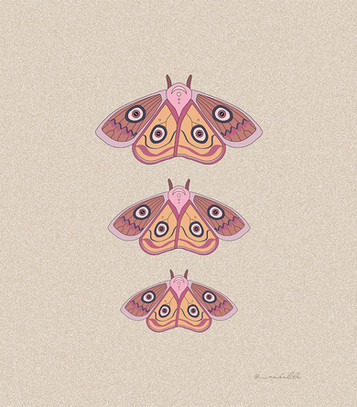 moths raise themselves   by Belle Formica